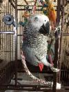 African grey boy and girl